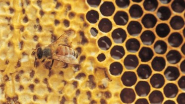 Bee-On-Honeycomb